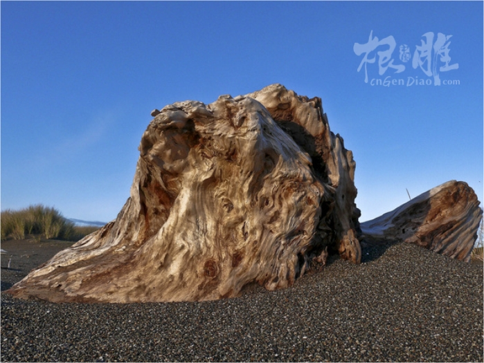 朽木根摄影欣赏-中国根雕